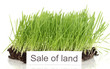 Green grass with ground as concept of land sale isolated