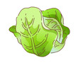 icon cabbage