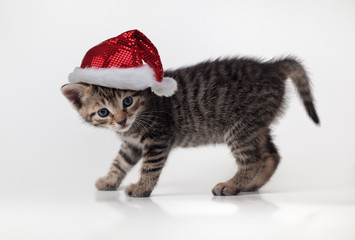 christmas portrait of cute kitten with Santa Claus hat on white