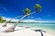 Fototapeten,strand,tropisch,palme,fidschi