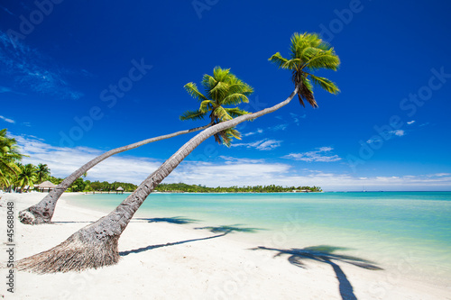 Palm trees hanging over stunning tropical lagoon