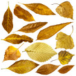 Autumn leaves set. White isolated
