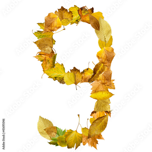 Number nine made of autumn leaves.