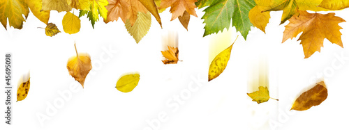 Border of autumn leaves