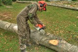 felling of trees, lumberjack