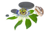 passionflower flower with stones and cockleshells  on a leaf