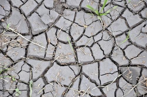 Deurstickers Droogte trockene Erde