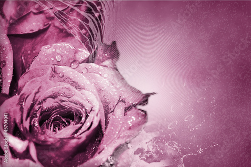 Pink Roses - Background