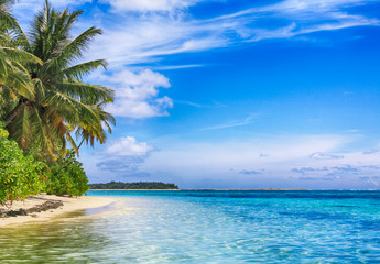 Tropical paradise. Coconut palm white sand tropical beach