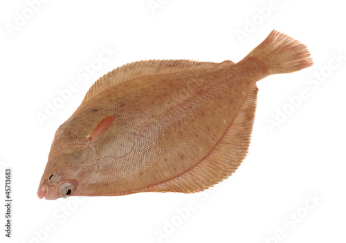 Dab Fish Isolated on White