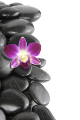 Border of beautiful orchid with pebbles