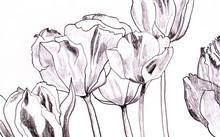 tulipe en s'appuyant sur blanc