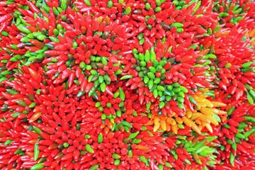 Piment de couleurs, rouge, orange et vert