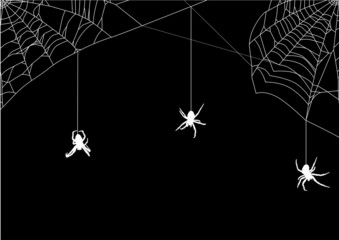 three small spiders in white web
