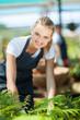 pretty female florist working inside greenhouse