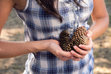 Autumn collection of pine cones