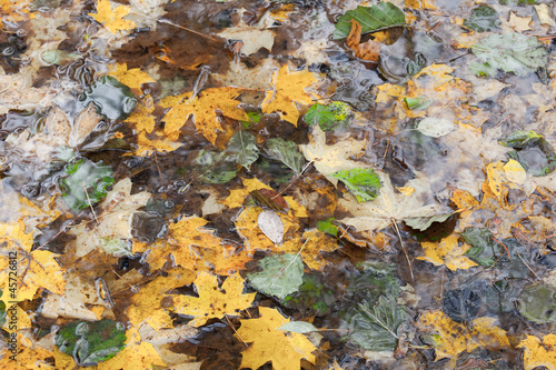 Wet autumnal leaves in the pond. Natural photo background