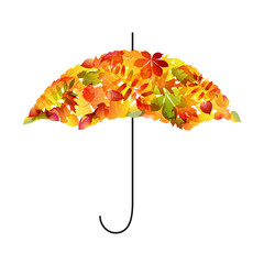 Autumn background. Umbrella of leaves