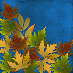 Autumn background with foliage and grunge papers design in scrap
