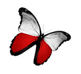 Fototapety Polish flag butterfly flying, isolated on white background