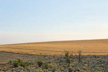 Desert landscape and harvested field under soft blue sky