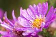 Fototapete Blume - Herbst - Blume