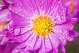 Fototapeta kwiaty - jesień - Kwiat