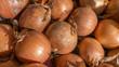 Cipolle (Allium Cepa)