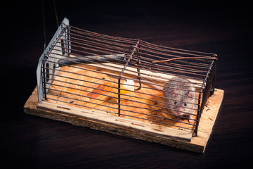 mice caught in the cage mousetrap