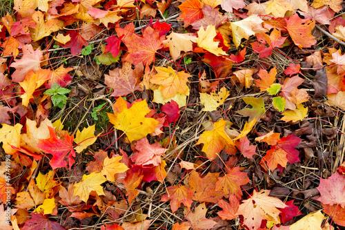 Bunte Herbstblätter auf der Wiese