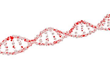 3d model of DNA
