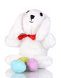 White bunny with Easter eggs isolated on white