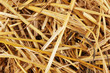 Golden hay close-up