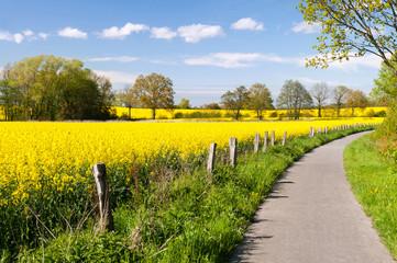 Weg zwischen gelb leuchtenden Rapsfeldern