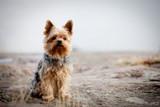 Fototapete Haustier - Terrier - Haustiere