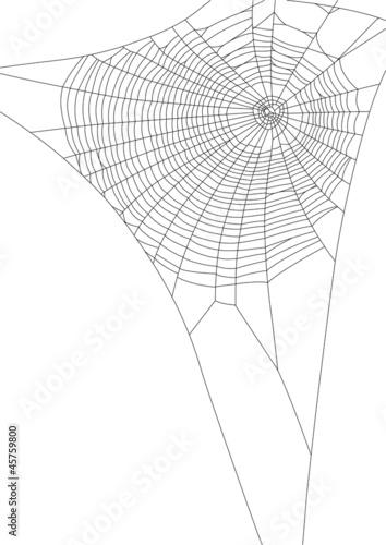 spider web - 45759800