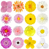 Fototapety Selection of  Pink, Orange, Yellow and White Flowers Isolated