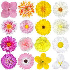 Selection of  Pink, Orange, Yellow and White Flowers Isolated