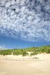 Fototapeten,drachen,strand,north sea,ostsee