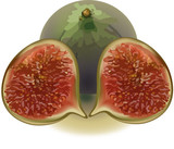 frutto del fico-fruit of the fig tree
