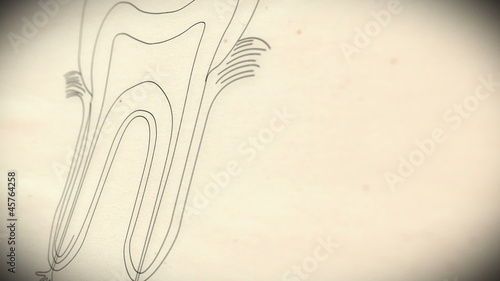 Human Tooth structure animation illustration Shallow Depth of Fi