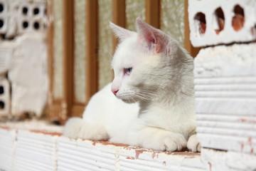 Gato blanco sentado en borde de ventana