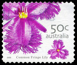 AUSTRALIA - CIRCA 2005 Common fringe lily poster