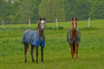 Colorful ponies in meadow