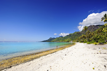 Temae's beach, Moorea, French Polynesia