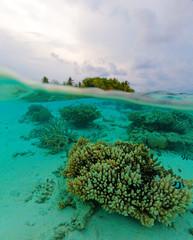 Semi Underwater Scene of Island and Reef