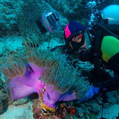 Big Purple Anemone and Scuba Diver