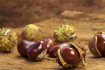 Some Chestnuts on autumnal barks background