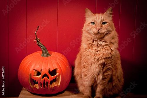 Cat Posing with Jack O' Lantern