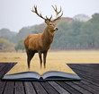 Creative concept image of red deer stag in pages of book